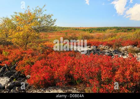 Dolly Sods Wilderness, Hopeville, West Virginia, USA - Stock Photo