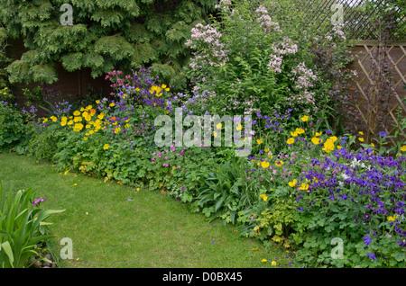 Welsh poppies aquilegia geranium kolkwitzia iris - Stock Photo