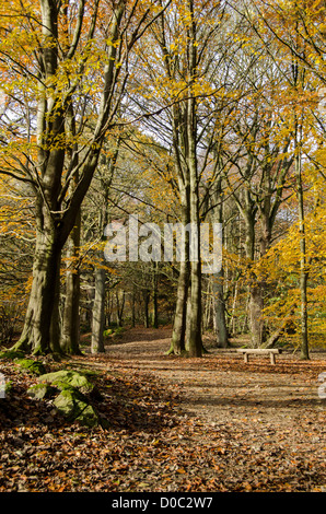 Autumn sunlight on trees, bench & quiet path covered in orange brown fallen leaves in scenic woodland - Middleton - Stock Photo