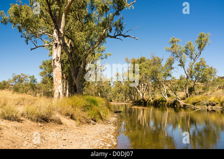 River red gum trees (Eucalyptus camaldulensis) in Ellery Creek in West MacDonnell National Park, Alice Springs, - Stock Photo