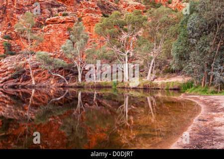 Ghost gum reflections at Ellery Creek Big Hole, West MacDonnell Ranges at sunset west of Alice Springs in the Red - Stock Photo