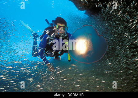 Scuba Diver Shines Underwater Light Through Jellyfish - Stock Photo