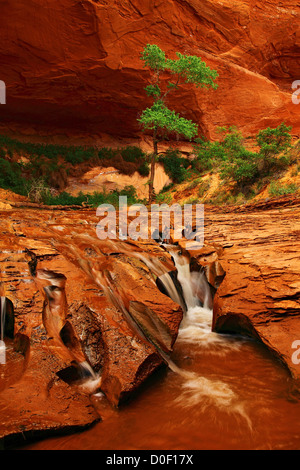 A small waterfall in Coyote Gulch, Grand Staircase-Escalante National Monument, Utah. - Stock Photo