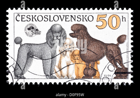 Postage stamp from Czechoslovakia depicting various poodles. - Stock Photo