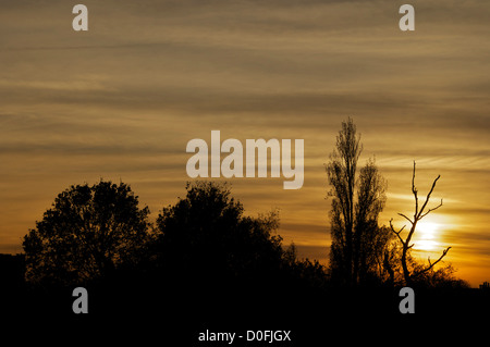 The sun setting in the distance silhouetting trees - Stock Photo