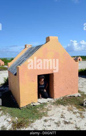 Red Slave, Bonaire, Dutch Antilles, Caribbean - Stock Photo
