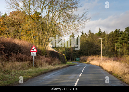 Deer warning sign on a country road. A cold bright afternoon in late Autumn. Moor Lane, Rosedale, North Yorkshire, - Stock Photo