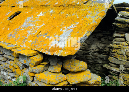 Split stone slabs covered in orange lichen used as roofing tiles on a derelict stone hut.  Mainland, Orkney, Scotland - Stock Photo