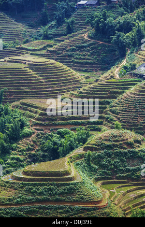 Rice Terraces in Northern of Vietnam,Sapa - Stock Photo
