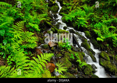 Wakeena falls- Ferns and spring vegetation near creek below the falls, Columbia Gorge National Scenic Area, Oregon, - Stock Photo