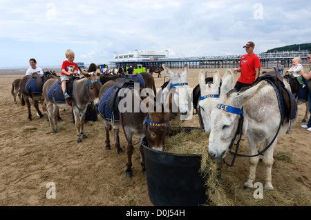 Donkey rides on the beach at Weston-Super-Mare in Somerset. - Stock Photo