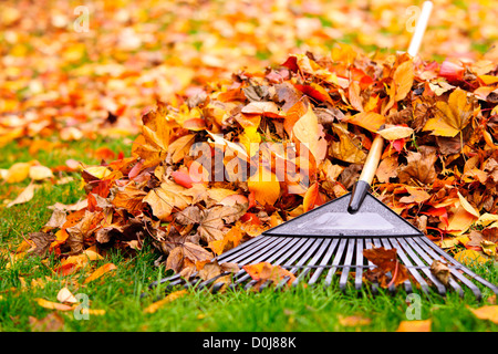 Pile of fall leaves with fan rake on lawn - Stock Photo