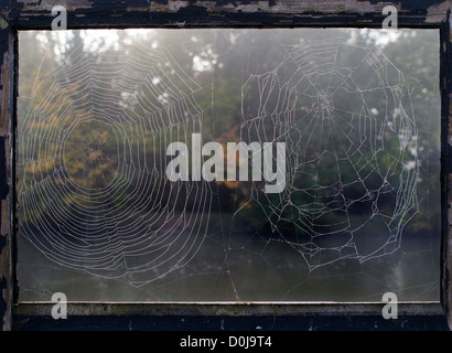 Two spider webs on Saint Helen's Wharf in Abingdon-on-Thames. - Stock Photo
