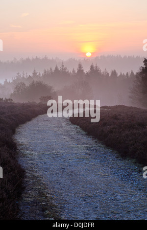 A view toward Mogshade Hill in the New Forest. - Stock Photo
