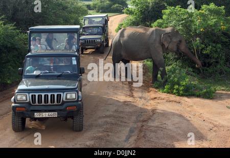 Wildlife safari jeeps watch an elephant feeding in Yala National Park in Sri Lanka - Stock Photo