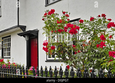 Red roses and a red dooor on a timber-framed houe in Lindsell. - Stock Photo