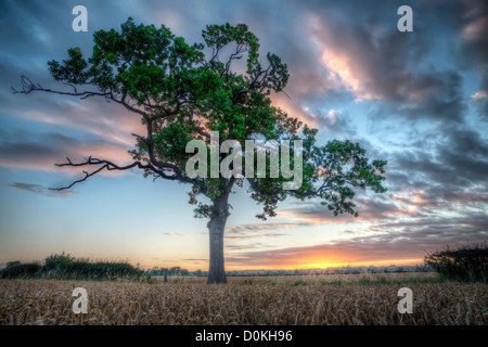 A view towards a lone tree at sunrise. - Stock Photo