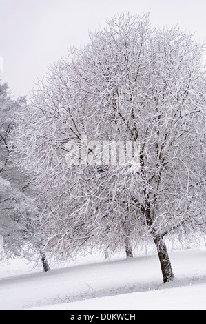 Snow-covered trees in Waterlow Park in North London. - Stock Photo