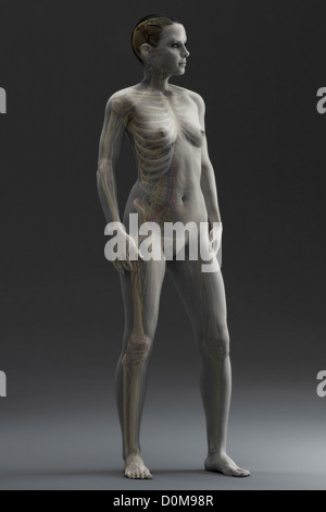 human skeleton within a female figure viewed from a three quarter, Skeleton