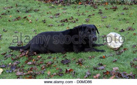 Black dog lying on back - photo#32