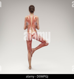 Musculature layered over female body in tree pose showing activity certain muscle groups in this particular yoga - Stock Photo