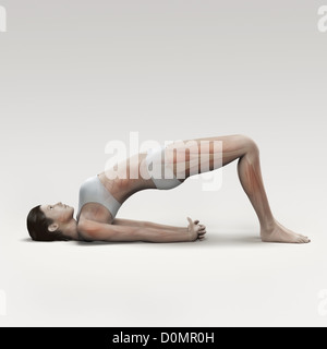 Musculature layered over female body in bridge pose showing activity certain muscle groups in this particular yoga - Stock Photo