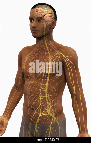 Male figure of African ethnicity with the nerves of the upper body and brain visible. - Stock Photo