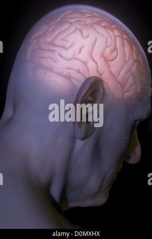 Anatomical model with an illuminated brain representing head pain. - Stock Photo