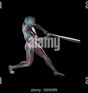 Muscles used in swinging a baseball bat