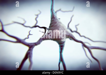 Pyramidal neurons or pyramidal cells are type neuron found in brain including regions such as cerebral cortex hippocampus - Stock Photo