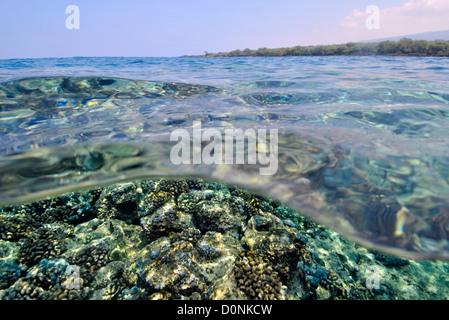 Coral reef at Honaunau Bay, Kona, Big Island, Hawaii, USA - Stock Photo