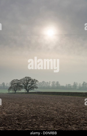 The late Autumn sun shines through fog near South Dalton, East Yorkshire, England - Stock Photo