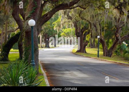 GA00116-00...GEORGIA - Live oak lined North Riverview Drive on Jekyll Island. - Stock Photo