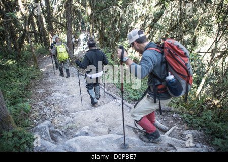 MT KILIMANJARO, Tanzania - A group of hikers on the steep trail descending through the forest from Mweka Camp to - Stock Photo