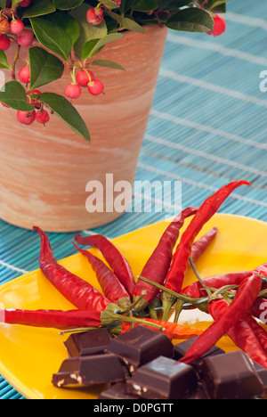 Picture of chilli peppers, chocolate and gaultheria plant - Stock Photo