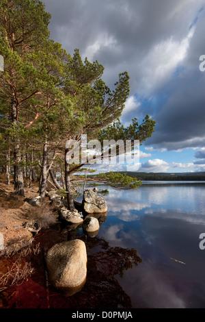 Loch Garten, Strathspey, Cairngorms National Park, Scotland - Stock Photo