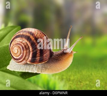 Garden snail - Stock Photo