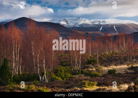 the Rothiemurchus forest and Cairngorms in winter, Scotland, UK - Stock Photo