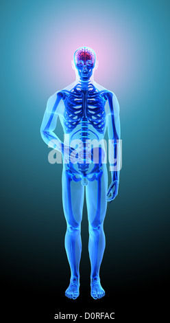 Human anatomy - headache - Stock Photo