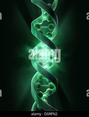 DNA strands - Stock Photo
