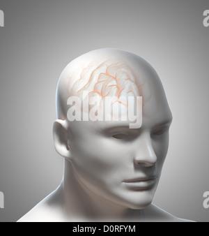 Human Intelligence - Stock Photo