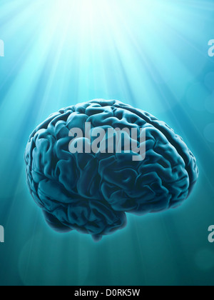 Knowledge and creativity concept - Stock Photo