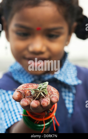 Young Indian school girl holding an Oleander Hawk moth . Daphnis nerii - Stock Photo