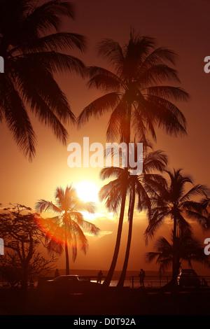 Port Douglas, Queensland, Australia, palms, sun, Sundown, sunset, Sunset, romantic, pair, couple, beach, seashore, - Stock Photo