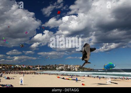 Festival of, wind, dragon, kite, aircraft, fun, Bondi Beach, Sydney, beach, seashore, steering dragon, wind, waves, - Stock Photo