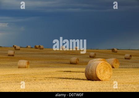 Hay rolls on the prairie, with threatening skies, Glasgow, Montana, USA - Stock Photo