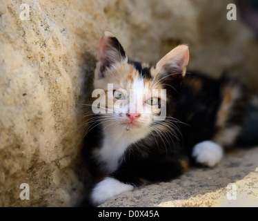 kitten sitting leaning on stone wall looking at camera with green eyes - Stock Photo