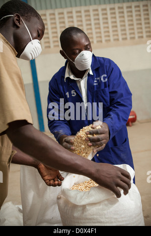 Workers fill sacks of corn at a warehouse in Kampala, Uganda, East Africa. - Stock Photo
