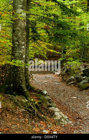 Hiking trail in a forest, Ordesa national park, Pyrenees - Stock Photo