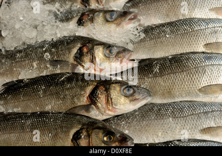 SEA BASS ON ICE ON DISPLAY IN A FISHMONGERS SHOP - Stock Photo